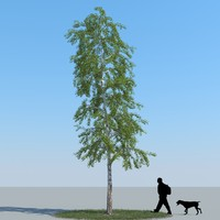 realistic birch tree 3d max