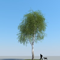 3ds max realistic birch tree