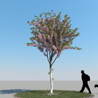 realistic cherry tree 3d max