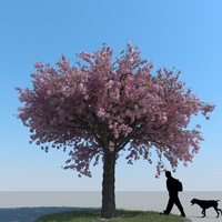 maya realistic cherry tree