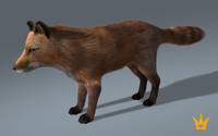 3d rigged fox muscles model