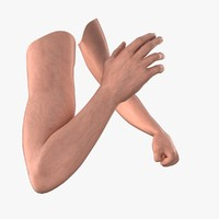 3d model of male arms