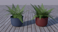 Simple Ferns