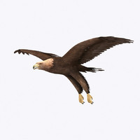 3d max golden eagle
