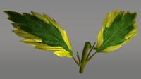 3d duranta flowering plants