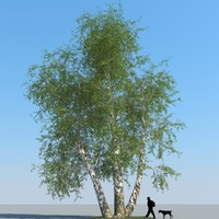 obj realistic birch tree