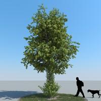 realistic linden tree leaf 3d obj