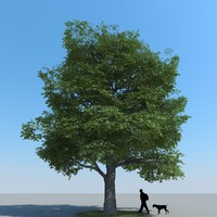 realistic maple tree 3d max