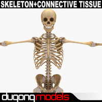 maya dugm01 human skeleton connective