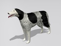 russian wolfhound dog c4d