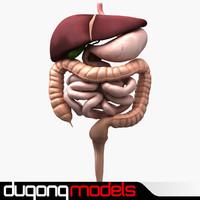 dugm01 human digestive 3ds