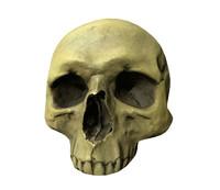 skull s poor 3d lwo