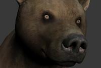 bear 3d x