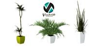 plants interior 3d max