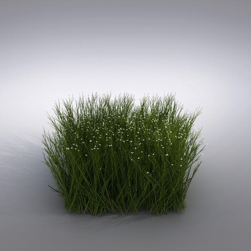 plant_1280001.jpg