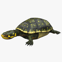 3d spotted turtle