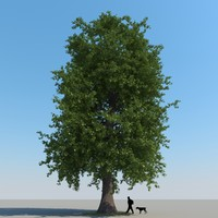 3ds max realistic chestnut tree leaf
