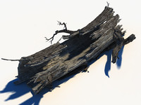 3d decayed tree bark