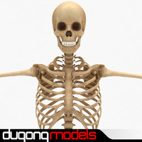 dugm01 human skeleton 3d 3ds