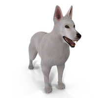 3d white swiss shepherd model