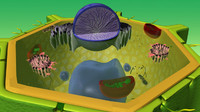 3d plant cell model