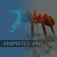 Animated ant insect