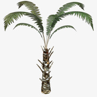 tree fern 3d 3ds