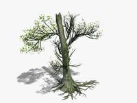 half tree 3d model