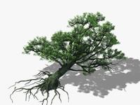 3d big tree