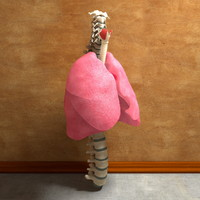 3d model of human lung spine