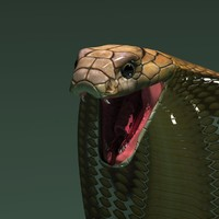 3ds max king cobra snake