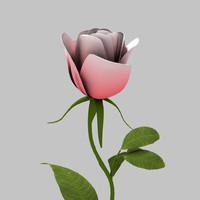 3d model pink rose