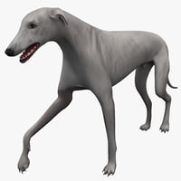 australian greyhound 2 pose 3d model