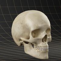 skull dentition 3d max