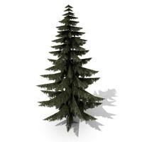 3d spruce model