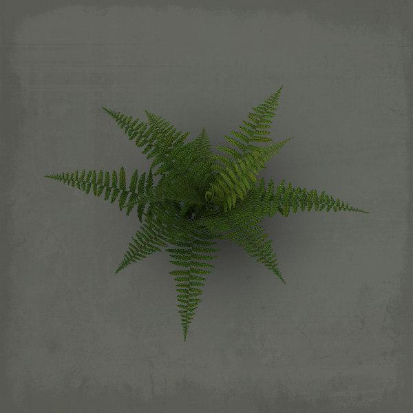 fern_sign01.jpg