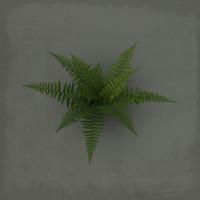 3d fern model