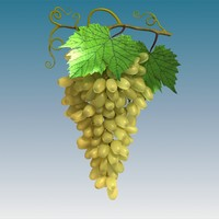 green grape cluster 3d model