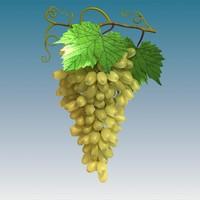 green grape cluster 3d model
