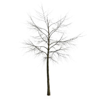 tree 1 branches 3d max