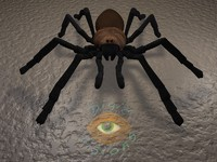 3d tarantula spider model
