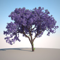 3d model of jacaranda tree forest