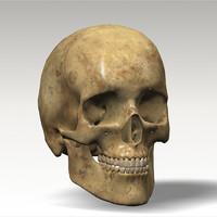 skull dentition 3d model