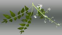 azadirachta trees indica obj