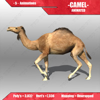 3d model of camel animations
