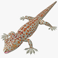 gecko reptiles lizards 3d model