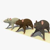maya 3 rats animations