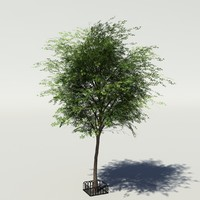 Tree v3 low-poly