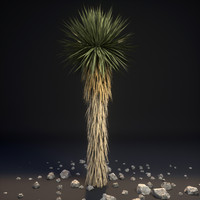 3d yucca palm trees brevifolia model
