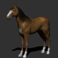 maya horse games
